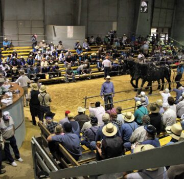 Waverly Midwest Horse Sale